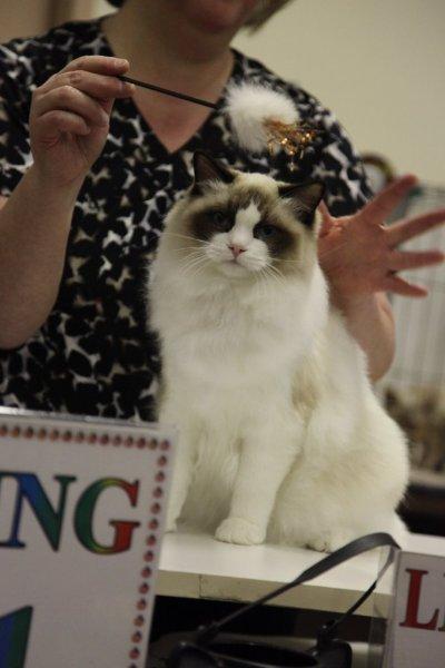 calgary-cat-show-184