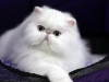 2010-calgary-cat-show-173
