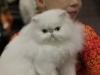 calgary-cat-show-098
