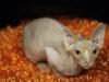 calgary-cat-show-108