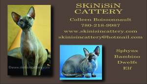 skin-is-in_business_card_2015-2