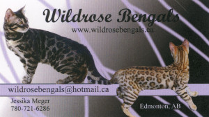 wildrose-bengals
